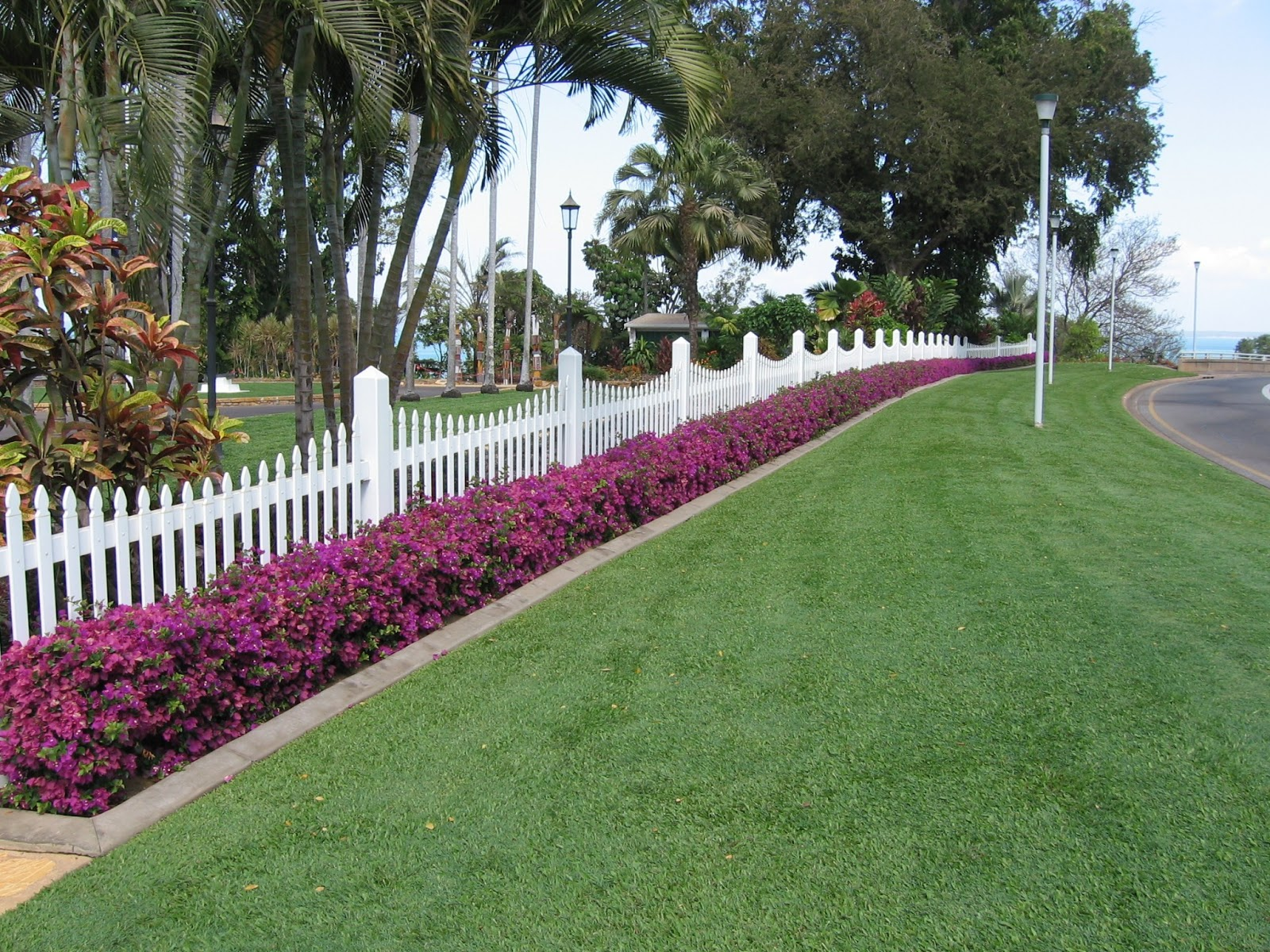 Gardening South Florida Style South Florida Hedge Plants VI