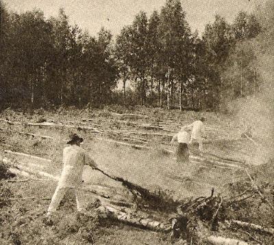 Финляндия, сельское хозяйство, история, экскурсии, частный гид