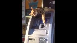 от лежит на банкомате