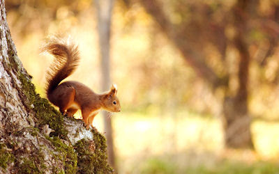 Ardillita curiosa en el bosque - Curious little squirrel