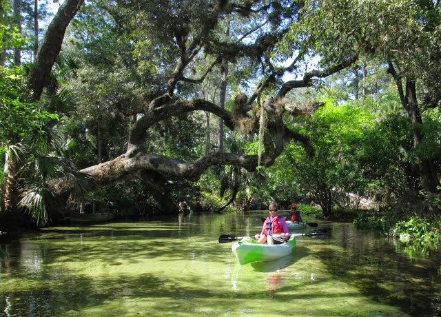 orlando tours nature wildlife