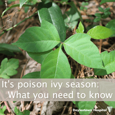 It's poison ivy season: What you need to know