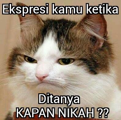Kumpulan Meme Ekspresi Kucing Lucu Jelas Beda