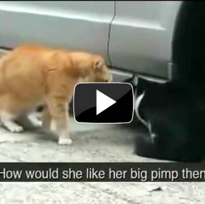 Image of: Kittens Funny Cat Videos Youtube Wanna Be Wanna Be Funny Cat Videos Youtube