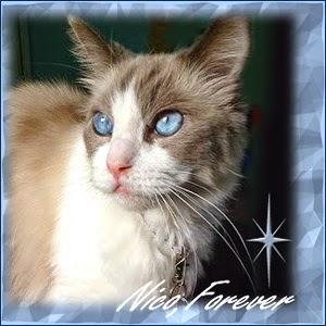 RIP Nico