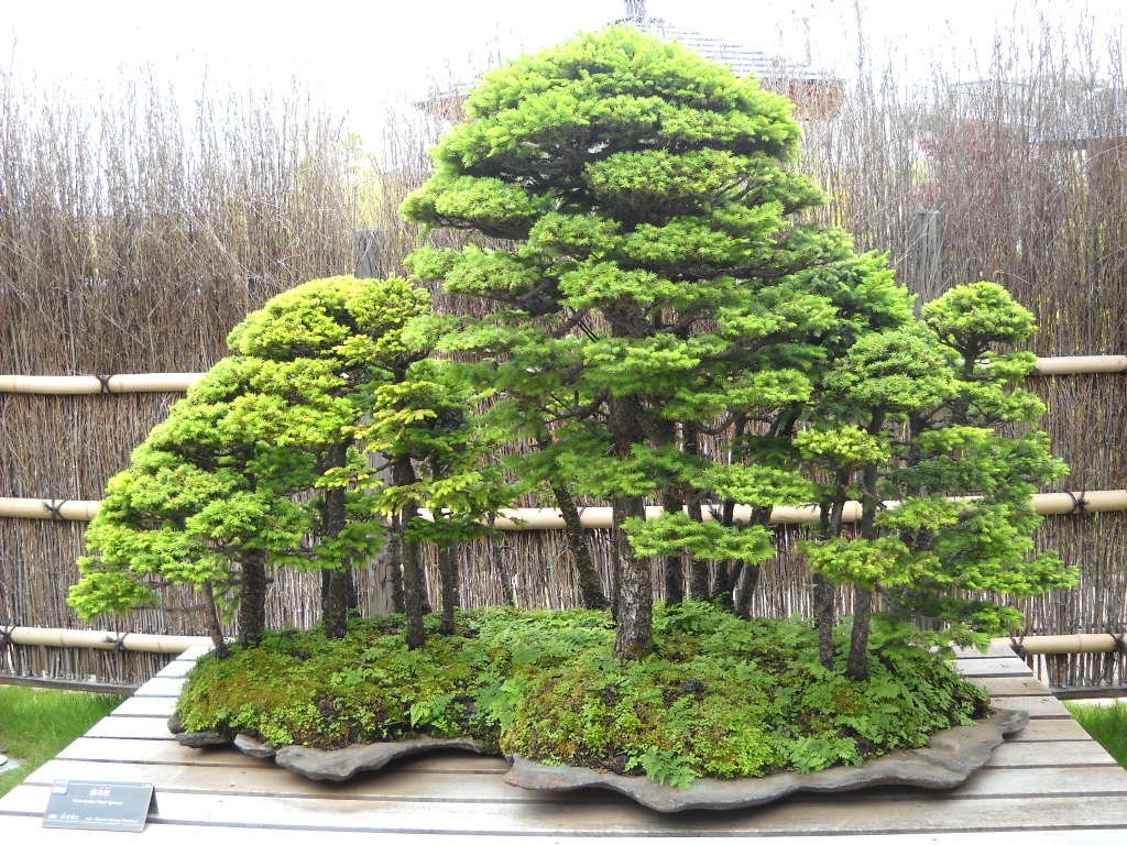 Daily Glimpses Of Japan Omiya Bonsai Art Museum Saitama