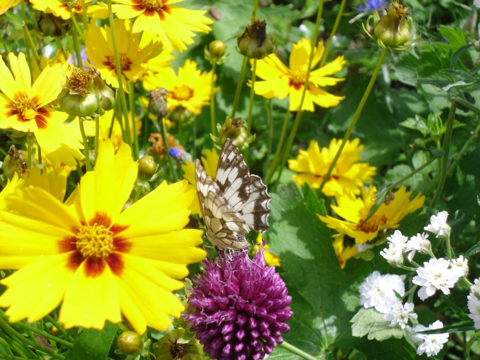 Le jardin des lutins les couleurs de l 39 t - Les couleurs de l ete ...