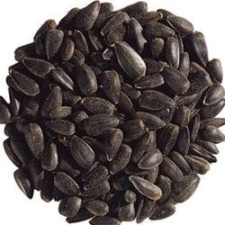 jinten hitam - obat tradisional rematik