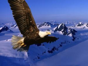 Un aigle royal vole dans le ciel, montagne en arrière-plan. Il symbolise les personnes éprises d'idéal, en opposition aux être bassement terre-à-terre, aux aspirations concrètes et viles, symbolisés par les pigeons.