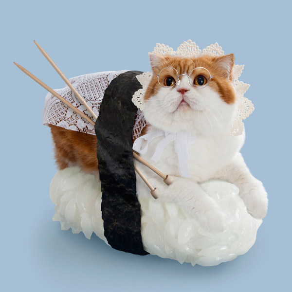 приколы над кошками сделали суши