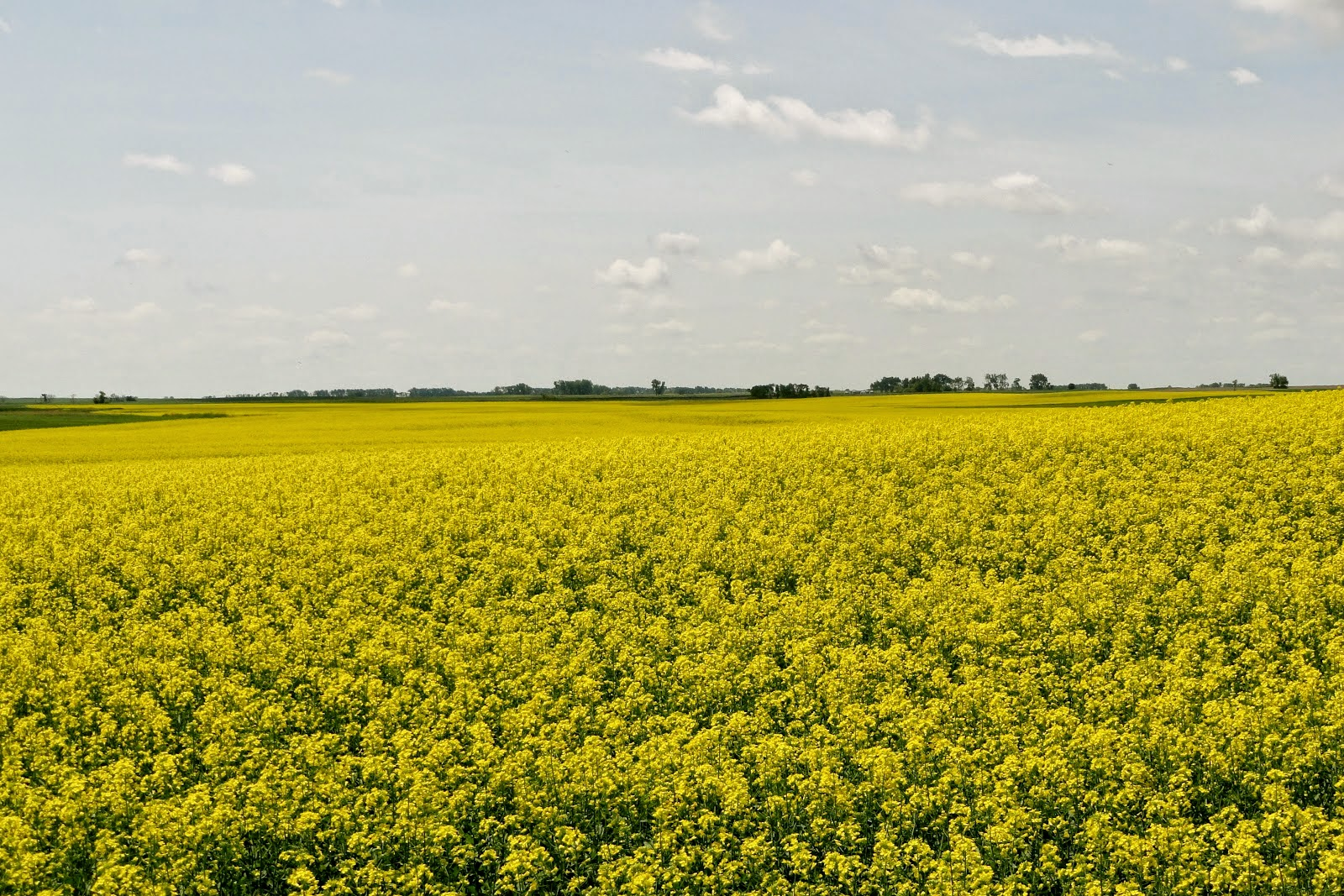 Important facts to know about canola oil forecasting