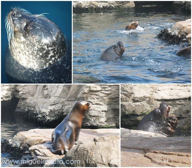 Focas-leones-marinos-Oceanográfico-Valencia