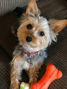I Love My Puppy Mocha...