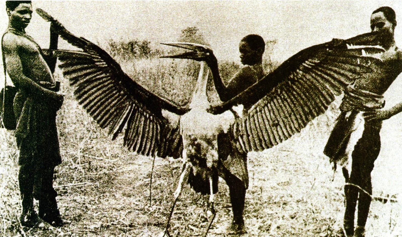 SEEKING THE MISSING THUNDERBIRD PHOTOGRAPH