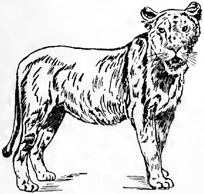 leona para imprimir y colorear