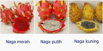 Khasiat buah naga untuk kesehatan dan kecantikan