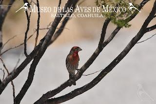 Fotografía tomada por el Sr. Aldegundo Garza de León