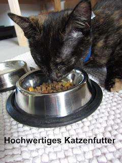 Was Katzen am liebsten Fressen