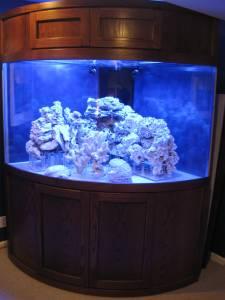 Used 100 gallon fish tanks for sale autos weblog for Used 300 gallon fish tank for sale