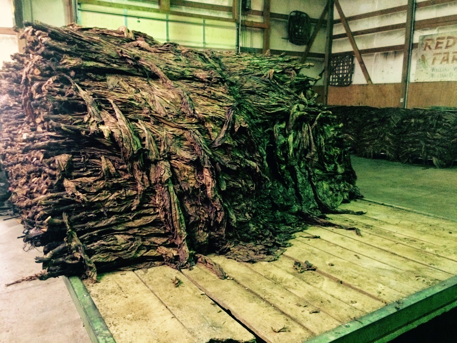 the tobacco is sorted on stripping table into 1 to 4 grades according to stalk position we have different contracts that require different amounts of