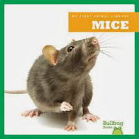 bookcover of MICE  (My First Animal Library)  by Martha E. Rustad