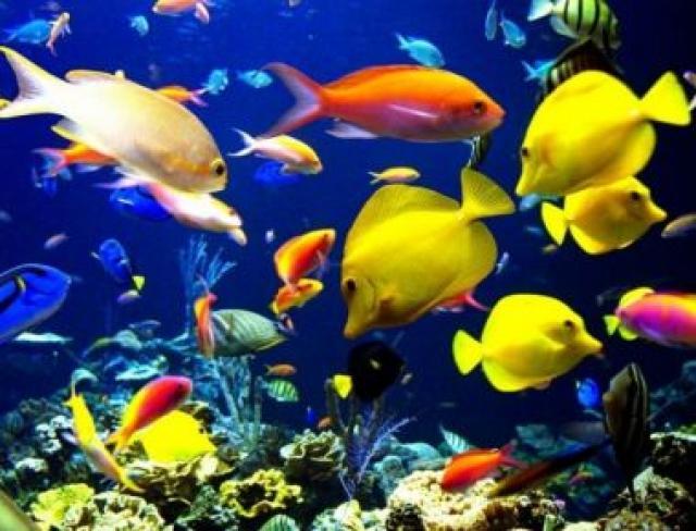 Un acuario en mi casa peces de colores - Fotos de peces del mediterraneo ...