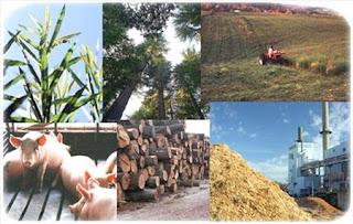 Green Energy-Biomass