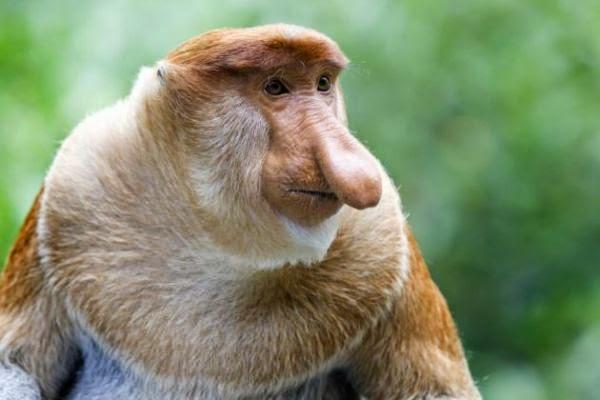 Los 10 Animales Mas Raros pero Encantadores y en Peligro de Extincion