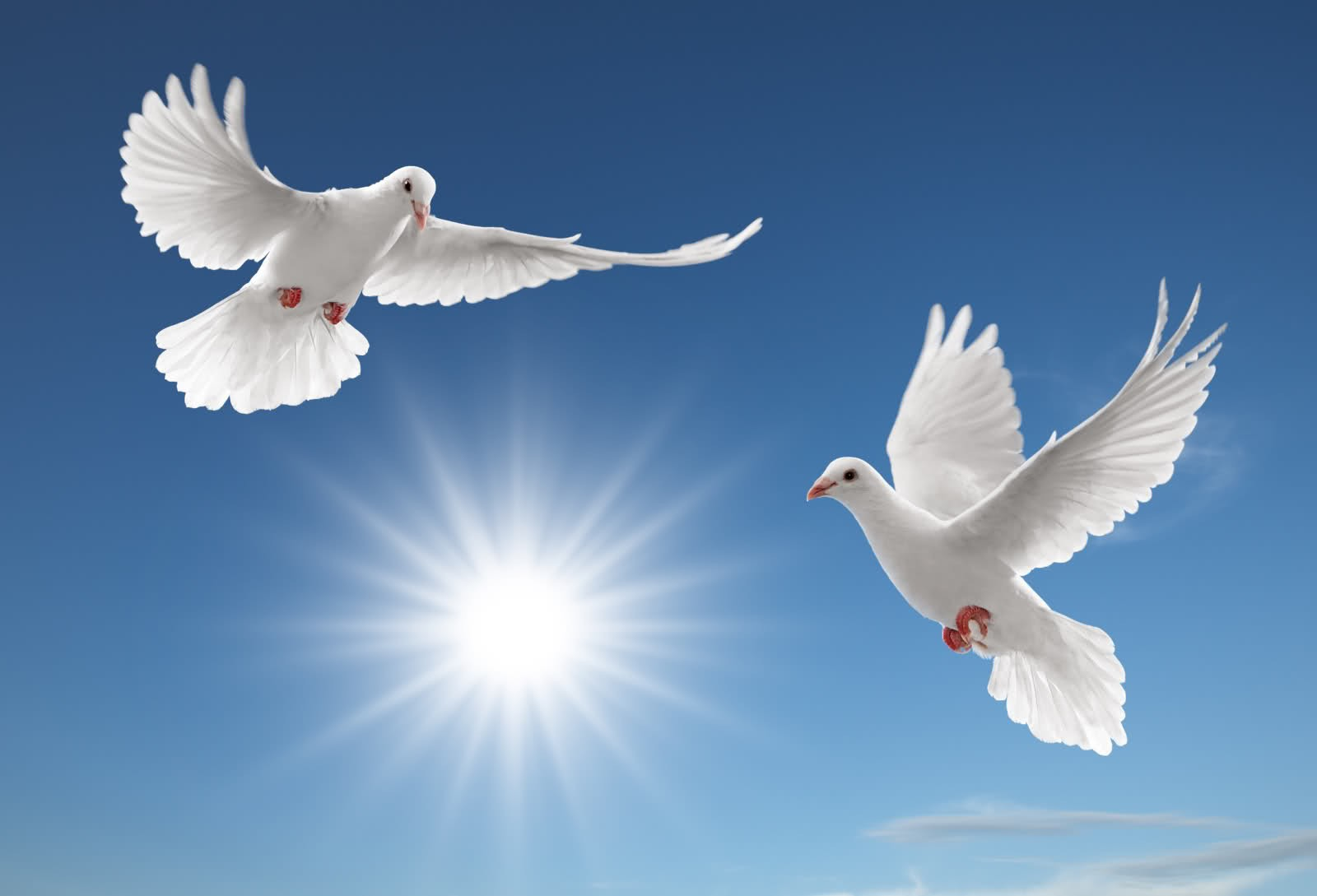 Very Nice Flying Pigeon Wallpapers