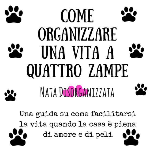 organizzare casa con animale