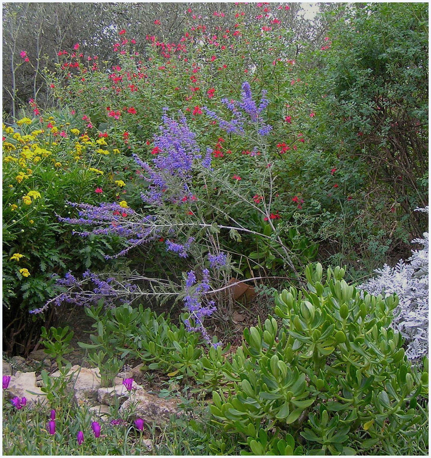 Curieux jardin octobre en bleu dans mon jardin for Jardin octobre 2015