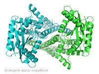 Молекула белка