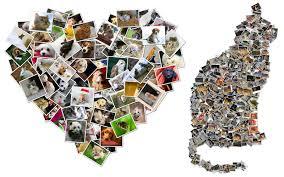 collage foto immagini gratis