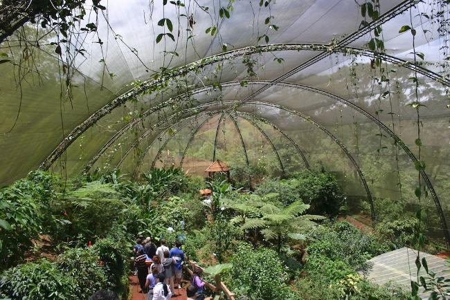 Costa Rica Butterfly farm
