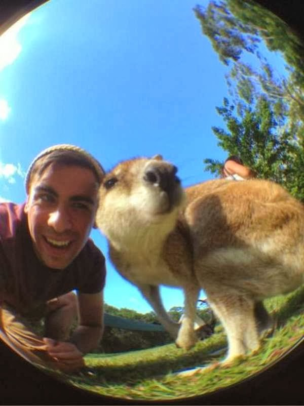 Funny animals taking selfies with humans (35 pics), animal selfies, funny animal pics, animal selfy