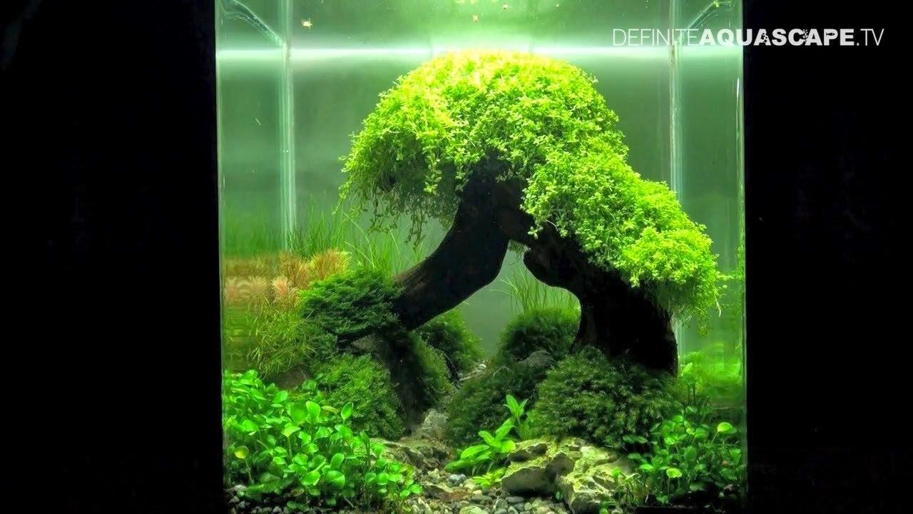 Hr Water Filter Cara Membuat Aquascape Aquarium External Aquaspace