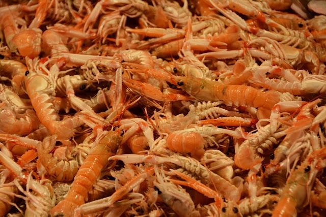 Rialto Fish Market Venice shrimps