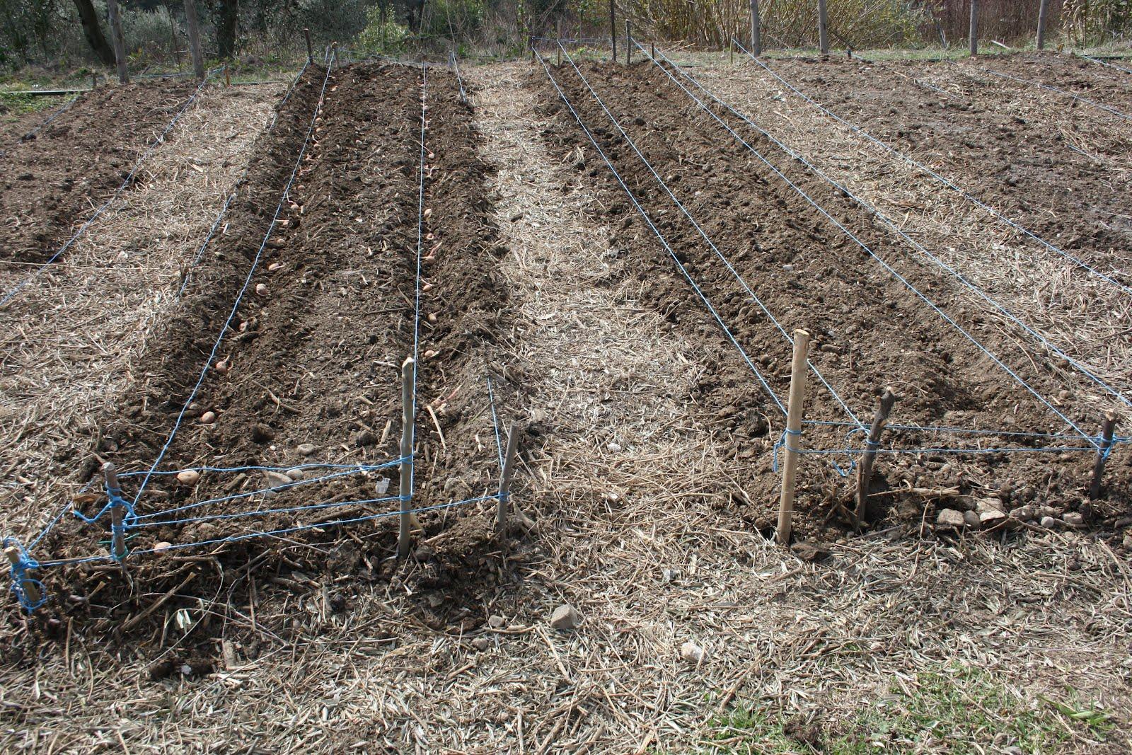 Losmogotes l 39 orto senza acqua for Piantare piselli