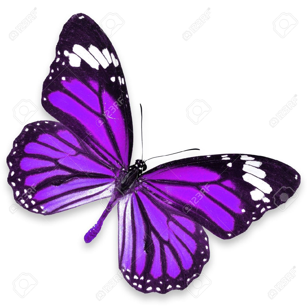 Gambar kupu kupu lengkap gambar foto - Images de papillon ...