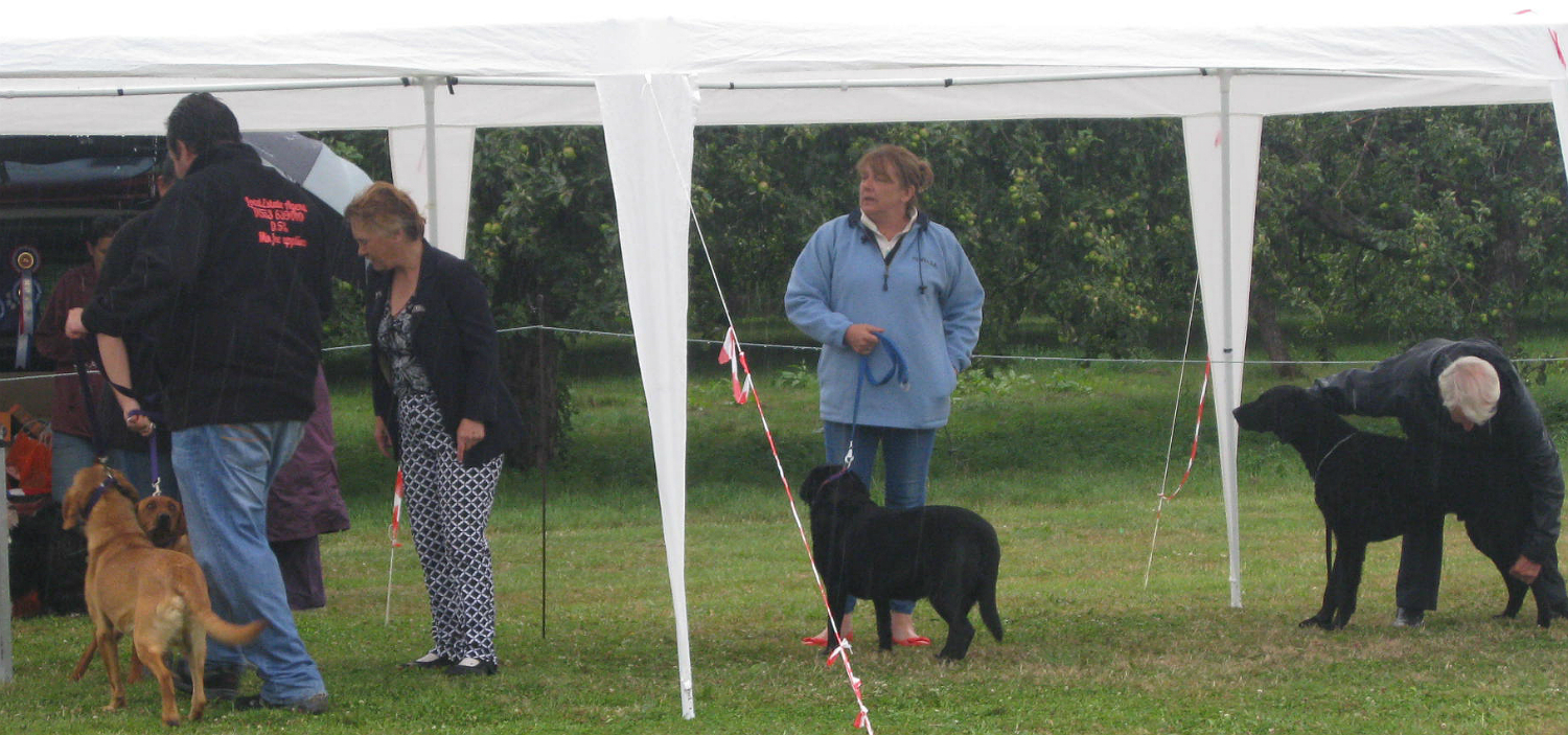 Dog Show In Wisbech