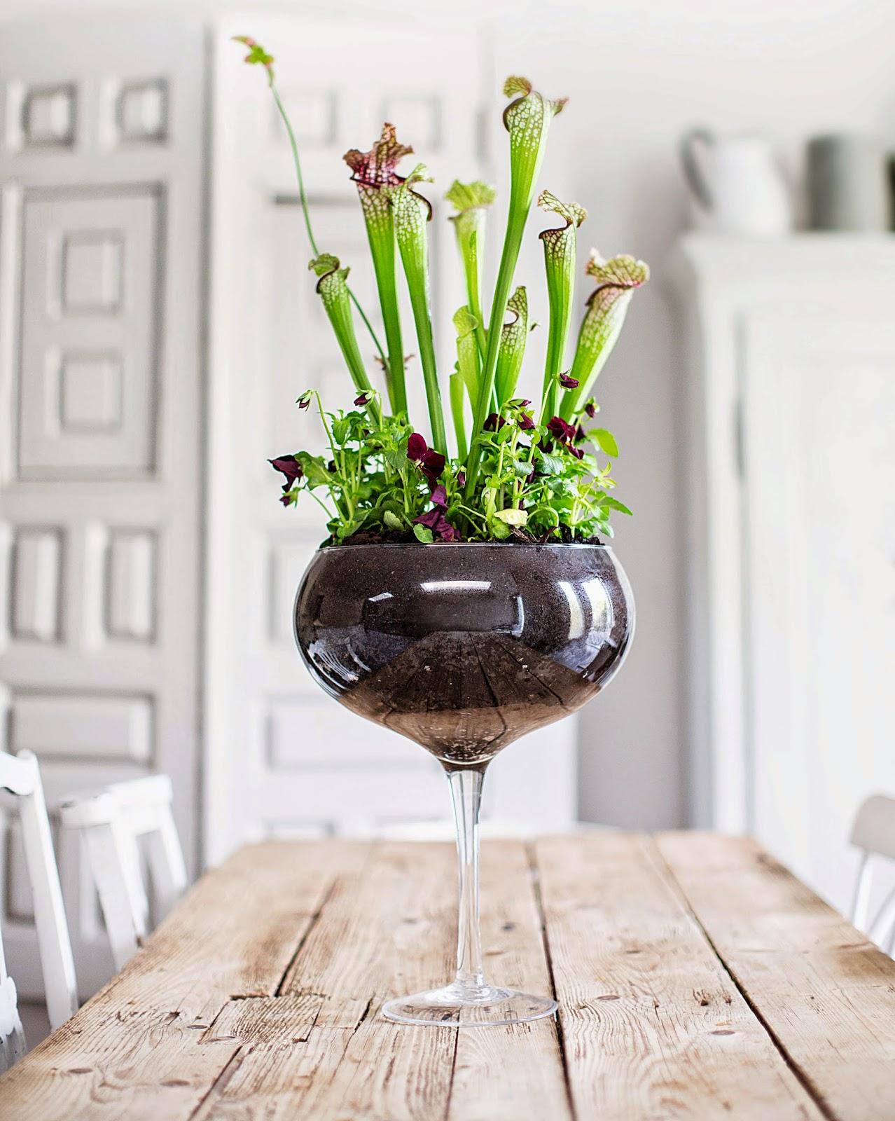 My scandinavian home the house gardener for Indoor gardening glasses