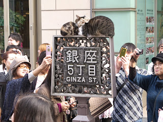 Pussy in Ginza