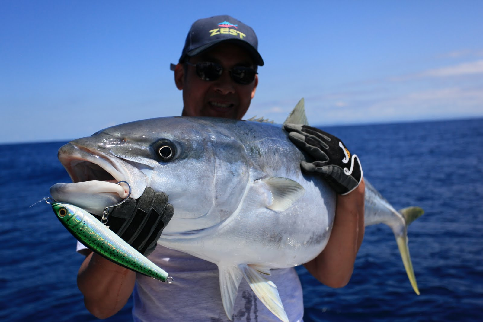 Big fishes of the world yellowtail southern seriola lalandi for World of fishing