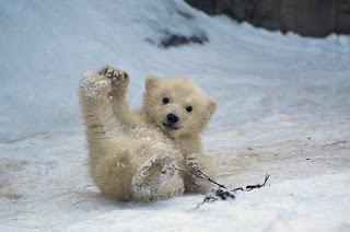 dyr på antarktis