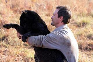 grappige foto: zwarte tijger knuffelen