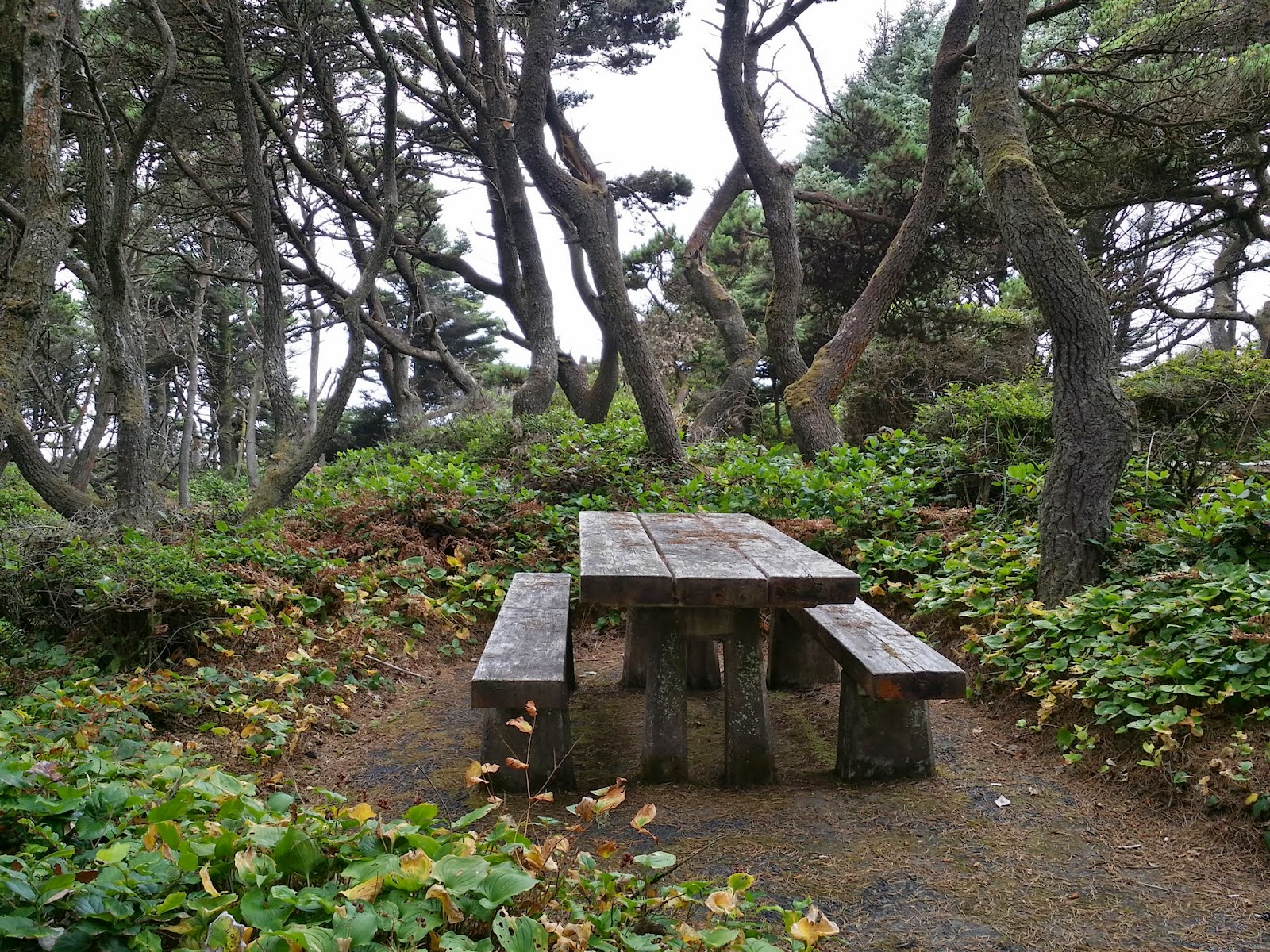 picnic area at Seal Rock State Recreation Site