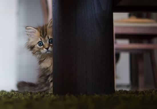 anak-kucing-comel-menyorok