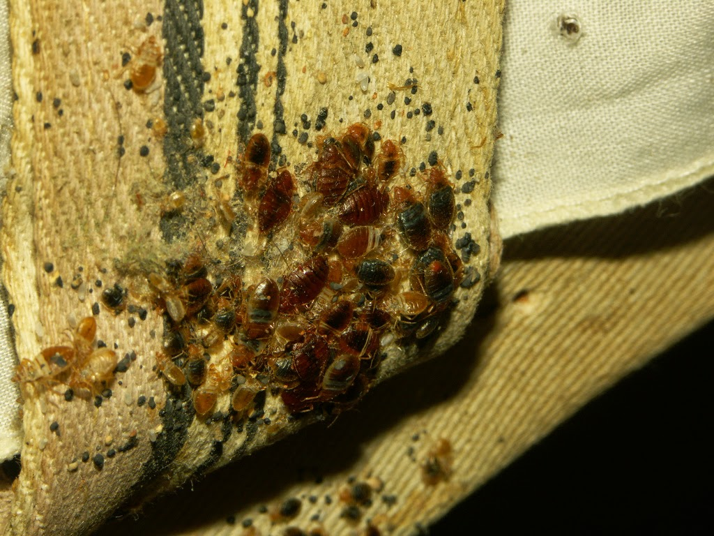 bed bug control london ontario