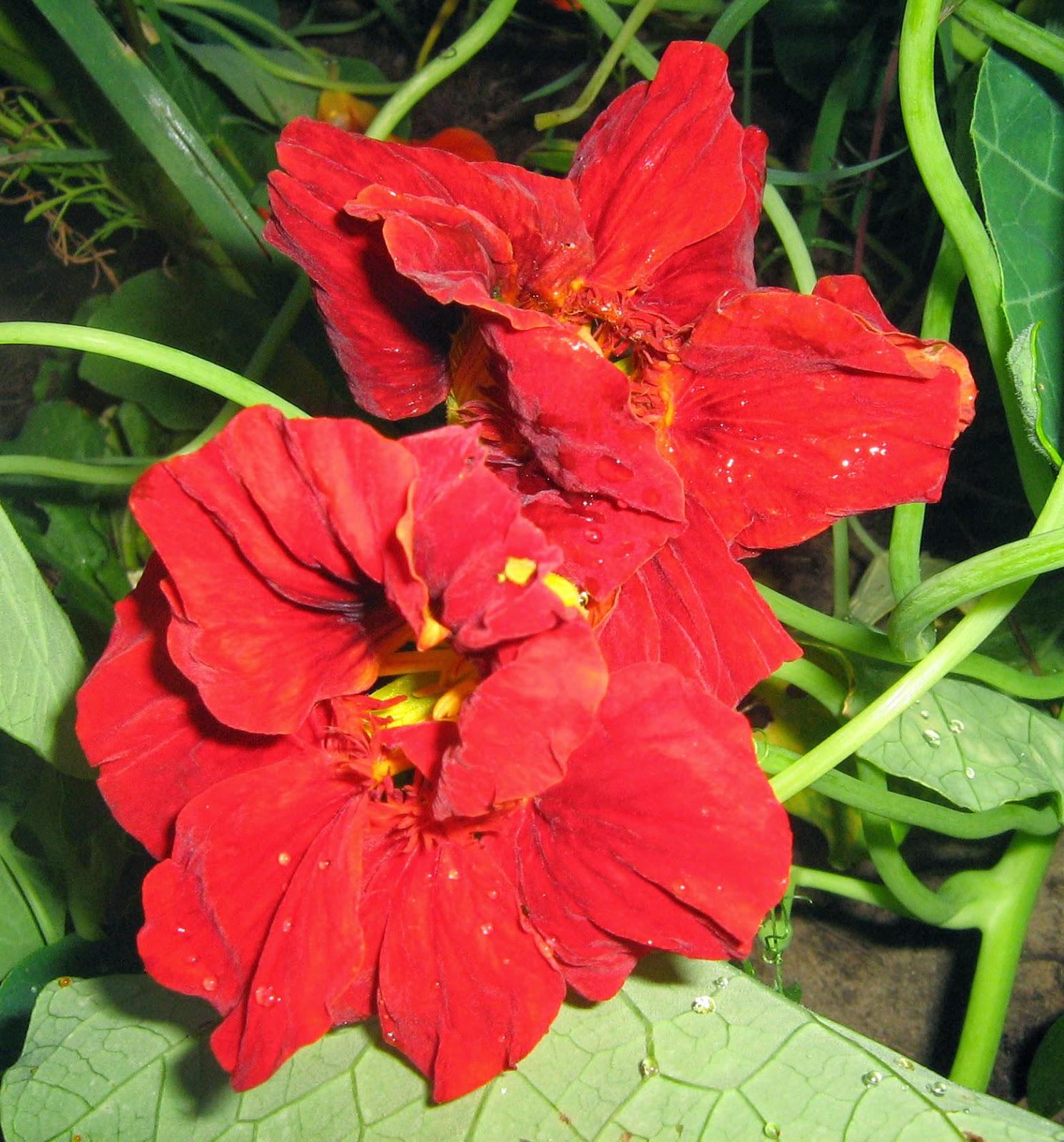 Цветок листики как иголочки
