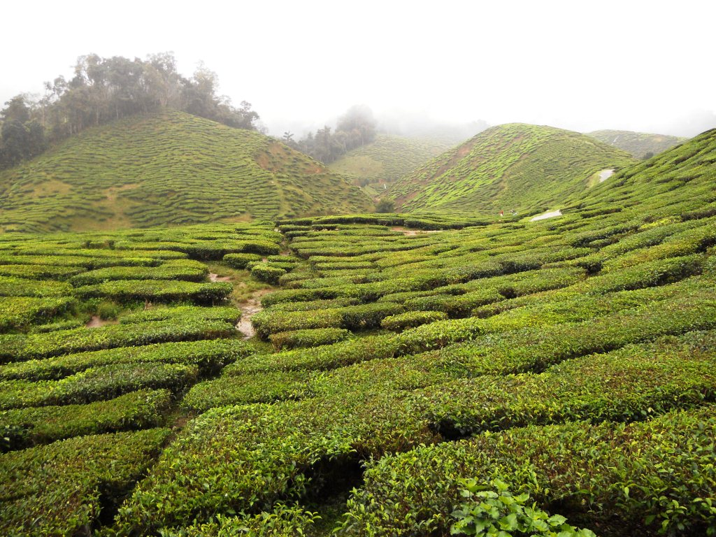 essay my trip to cameron highland My trip to thailand i went to thailand with my little brother, stepmom and dad i went there about four years ago she is from thailand and  your essay lacks a central idea, even though you had such tasty ingredients.